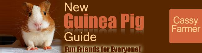 New Guinea Pig Guide For 2021
