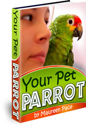 How To Care For Your Pet Parrot In 2021