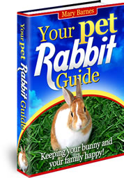 Your Pet Rabbit Guide in 2021