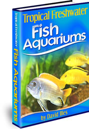 Tropical Freshwater Fish Aquariums In 2021