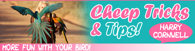 Cheep Tips And Tricks For 2021