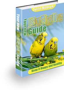 Your New Budgie Guide For 2021