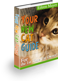 Your New Cat Guide For 2021