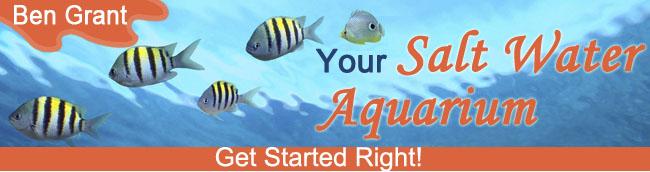 Your Salt Water Aquarium For 2021